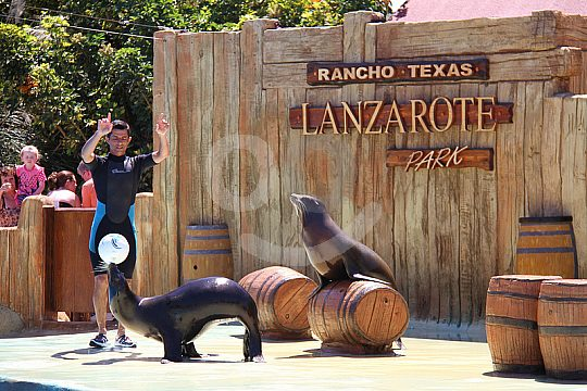 entry tickets for the sea lion show in Rancho Texas Park