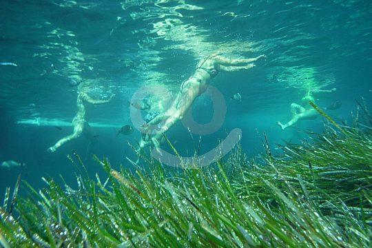Fornells marine reserve