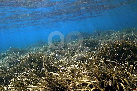 marine reserve island Tabarca
