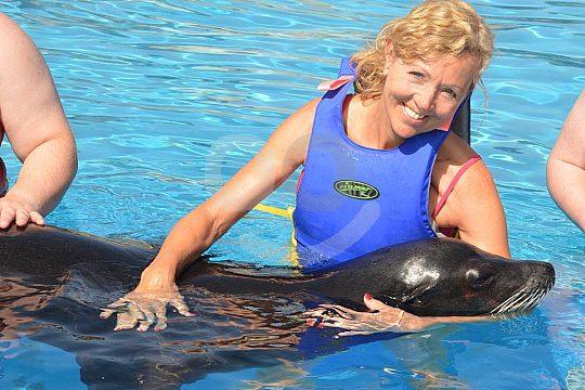Lanzarote sea lion encounter