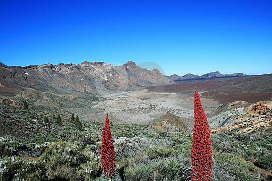 Ausflug Teide Teneriffa