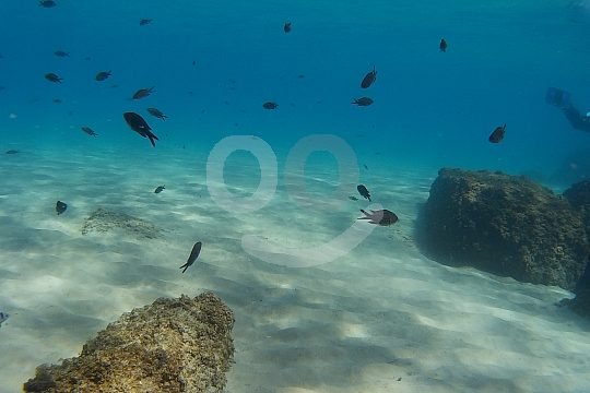 Discover Scuba Diving Tarragona