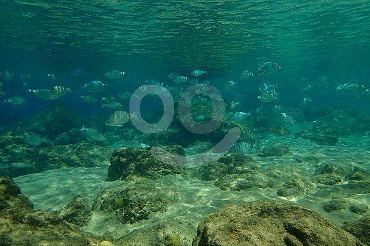 Lanzarote Unterwasserwelt entdecken beim Tauchen