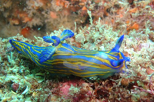 Creatures found when diving in the Atlantic Ocean