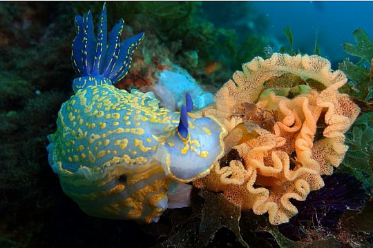 Discover sea animals while diving in the Algarve