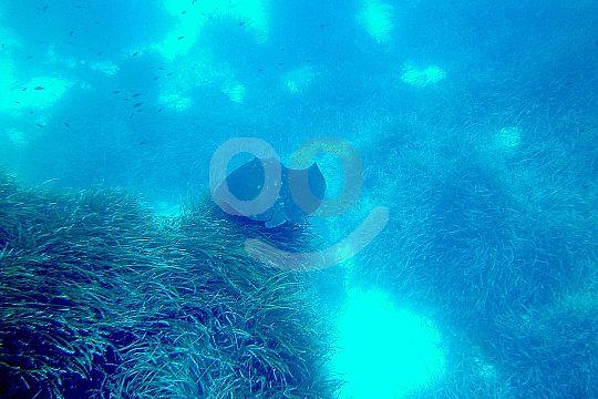 Menorca Diving is beautiful