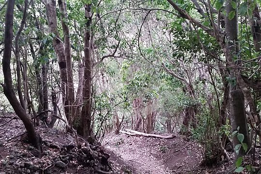 Hike through the laurel forest on Tenerife