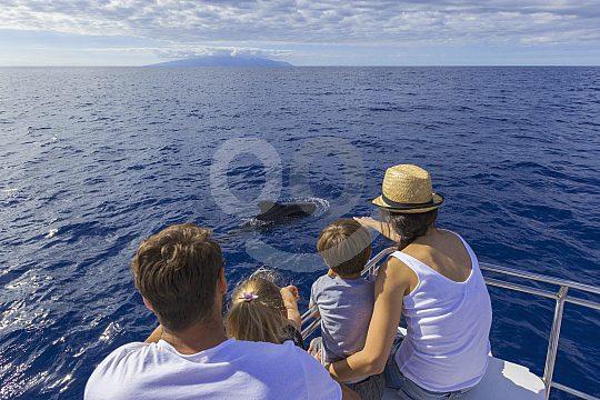 Segeln mit Delfinbeobachtung auf Teneriffa