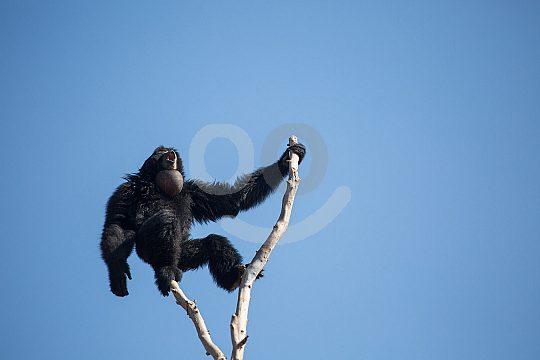 A monkey in Benidorm zoo