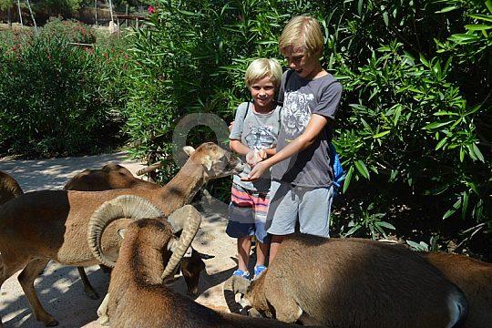 Children feed goats in Benidorm Zoo