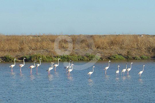 Birds in the Algarve