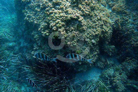 Unterwasserwelt Costa Blanca