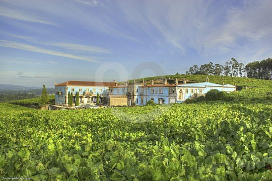 wine tours in Galicia with guide