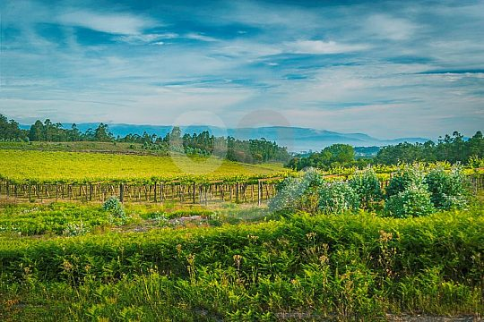 wine tours in Galicia to wine-growing regions