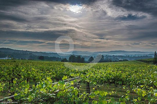 explore Galician wine-growing areas