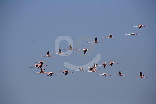Bird-watching in the Algarve