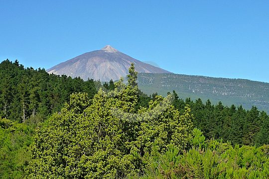 discover Teide National Park on an island tour