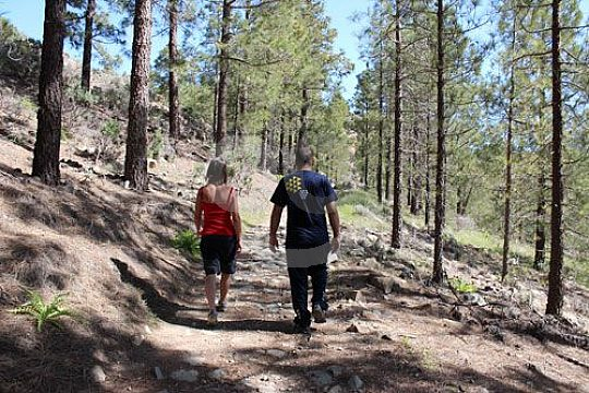 Forest paths hike on Gran Canaria