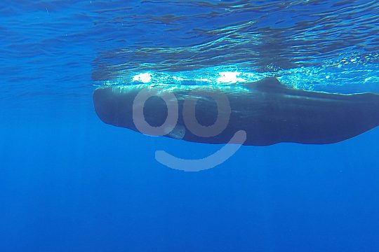 watch whales on Madeira