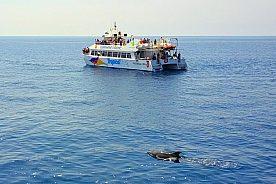 Boot Delfinbeobachtung Mallorca