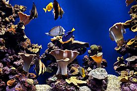 Cheap entry tickets for Palma Aquarium in Majorca south