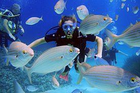 Trial diving close to Playa de Palma, Majorca, or diving course PADI