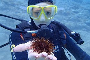 Snorkelling and diving for beginners and certified divers in Crete