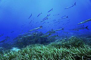 Unterwasserwelt beim Tauchen auf Menorca sehen