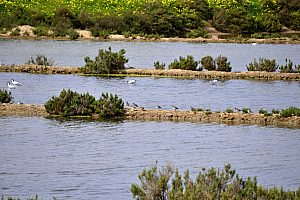 Trek in Ria Formosa in the Algarve: Hiking and bird-watching in Ludo and Quinta do Lago