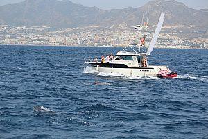 Bootstour mit Delfinen an der Costa del Sol