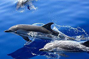 Delfine beobachten auf Lanzarote