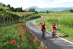 Garda by bike with start in Verona: e-bike tour at Lake Garda incl. guide