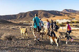 Wanderung mit Ziegen auf den Kanaren