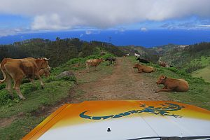 Jeep safari from Funchal: volcanic origins at the southwestern coast of Madeira