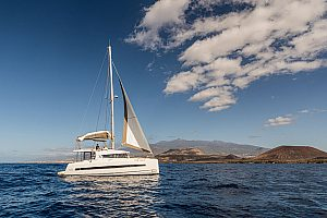 Private boat trips in Tenerife by catamaran with wale and dolphin watching