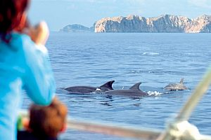 Watch wild dolphins in Mallorca in their natural habitat