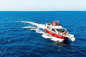 Bootsausflug zu den Walen