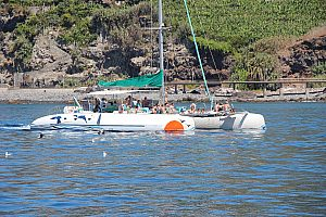 Catamaran Tour in Madeira: Watch dolphins and whales play