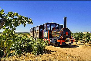 Delightful wine tasting in Mallorca: 2 wineries, tapas and Wine Express train ride