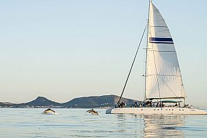 Dolphin watching in Majorca at a catamaran trip from Cala Ratjada