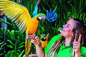 Papageien-Show im Oasis Park Fuerteventura