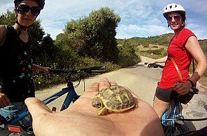 Gruppe von Fahrradfahrern auf Menorca beim Start