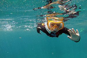Under water in Tenerife: snorkelling with guide in the south of the island