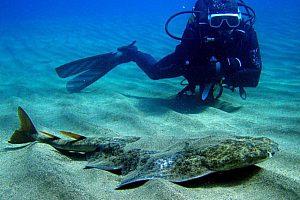 Unterwasserwelt des Atlantischen Ozeans auf Gran Canaria lädt zum Tauchen ein