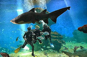 Palma Aquarium: Diving with sharks in Majorca