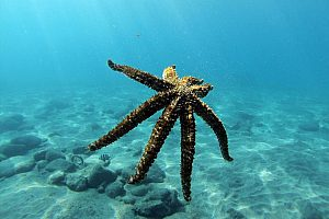 Diving in Tenerife: dives and scuba diving courses from Playa la Arena