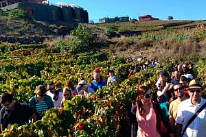 Wine tasting on Tenerife: Tour from the South with a visit to La Laguna