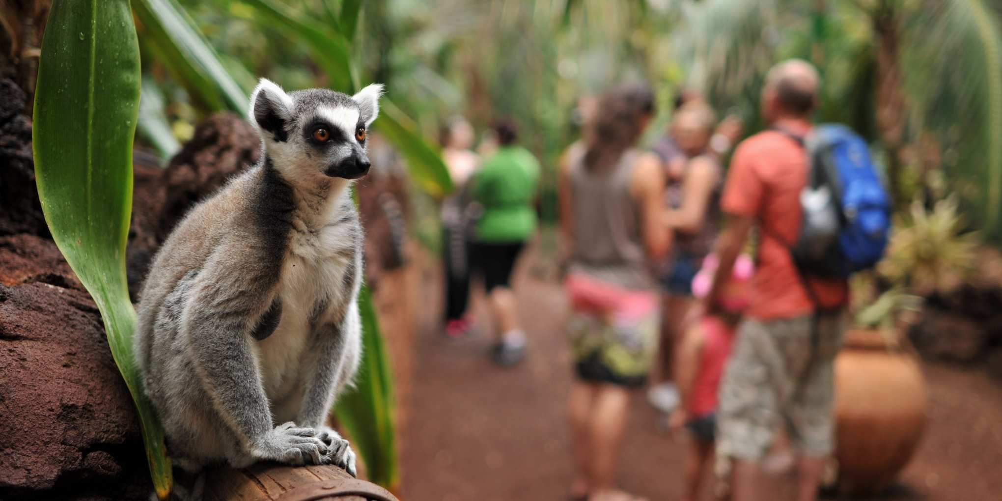 Things to do Fuerteventura animal park