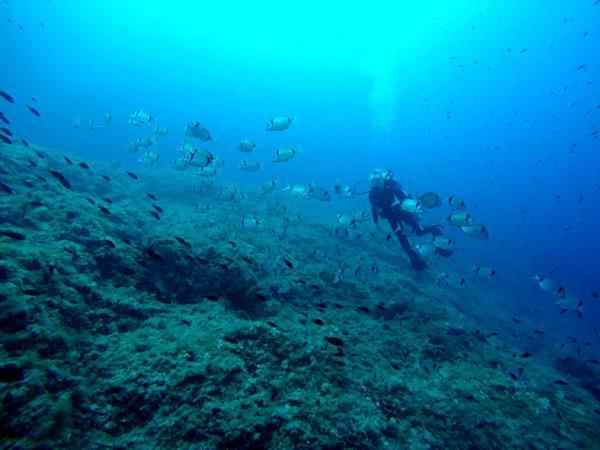 Majorca trial dive scuba diving