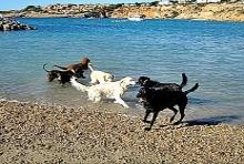 Strandurlaub mit Hund Mallorca
